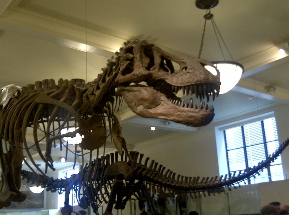 Dino NY